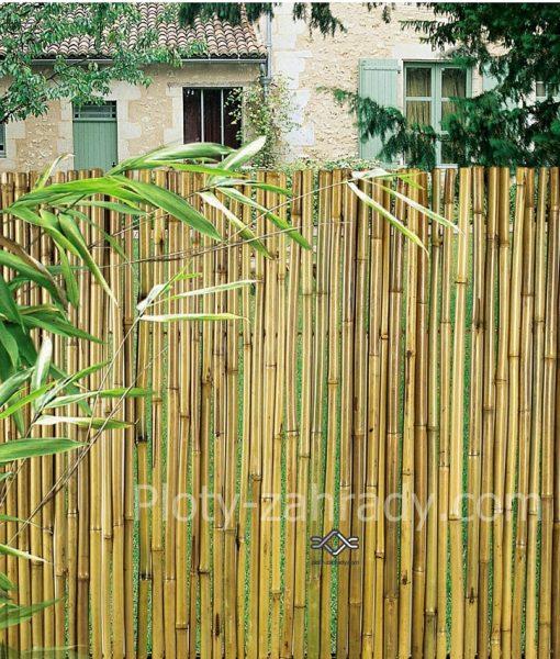 Bambusový plot s priemerom 9 mm -15 mm (2)