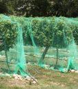 Ochranná sieť proti vtákom cená (35)