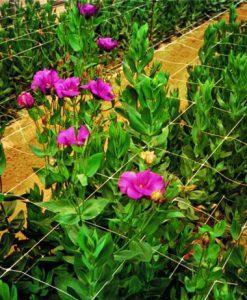 Sieť podporná pre kvety cená