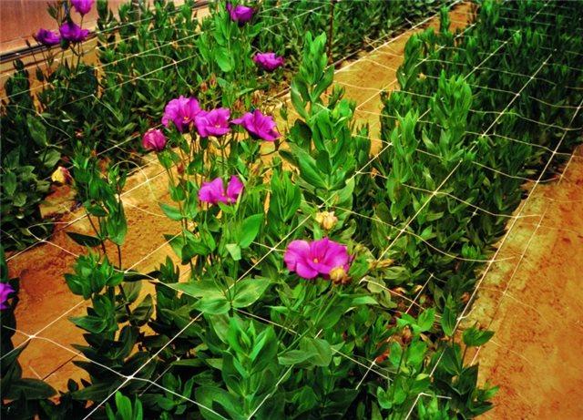 Sieť podporná pre kvety